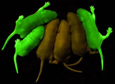 green_brown_mice_1
