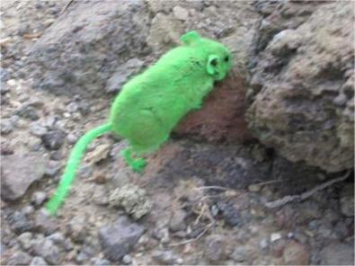 greenmouseru
