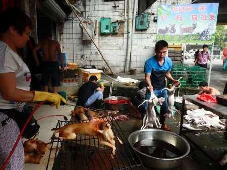 Zum-Hundefleisch-Festival-auf-dem-Markt-im-suedchinesischen-Yulin